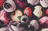 Aranjamentele centrale – eleganta si stil
