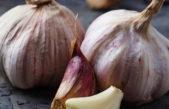 Leurda sau usturoiul salbatic – cel mai bun detoxifiant natural
