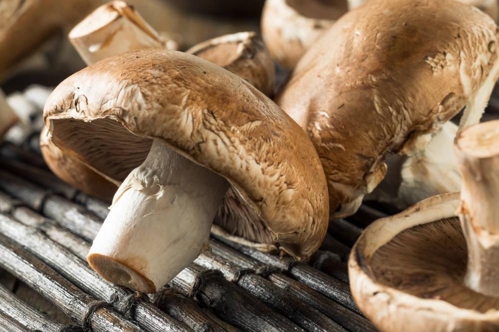 ciuperci portobello